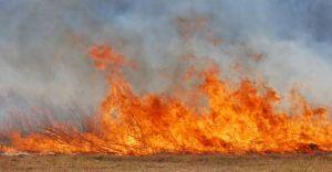 Paliła się trawa przy ulicy Marianki
