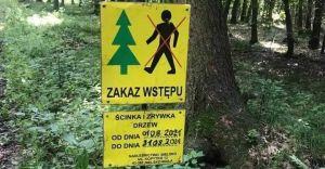 Wycinka drzew w Górnym Lesie budzi obawy mieszkańców