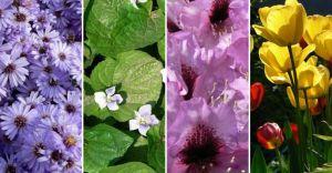 Twój ogród: piękny i wyjątkowy