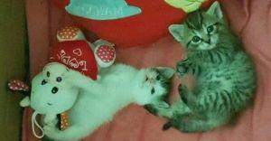 Czechowicka fundacja prowadzi zbiórkę na rzecz kotów