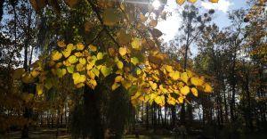 Foto-dnia: jesień w Goczałkowicach-Zdroju