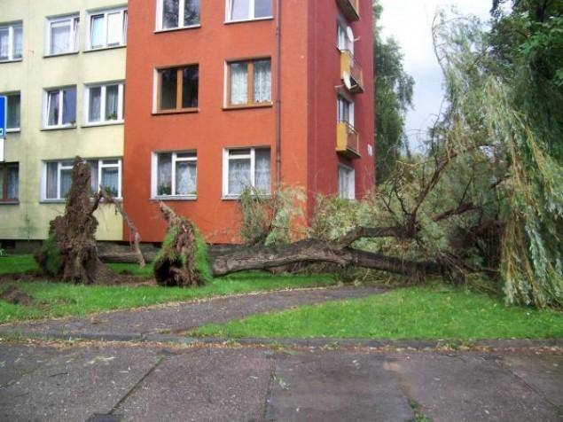 Poniedziałkowy wiatr wyrywał drzewa