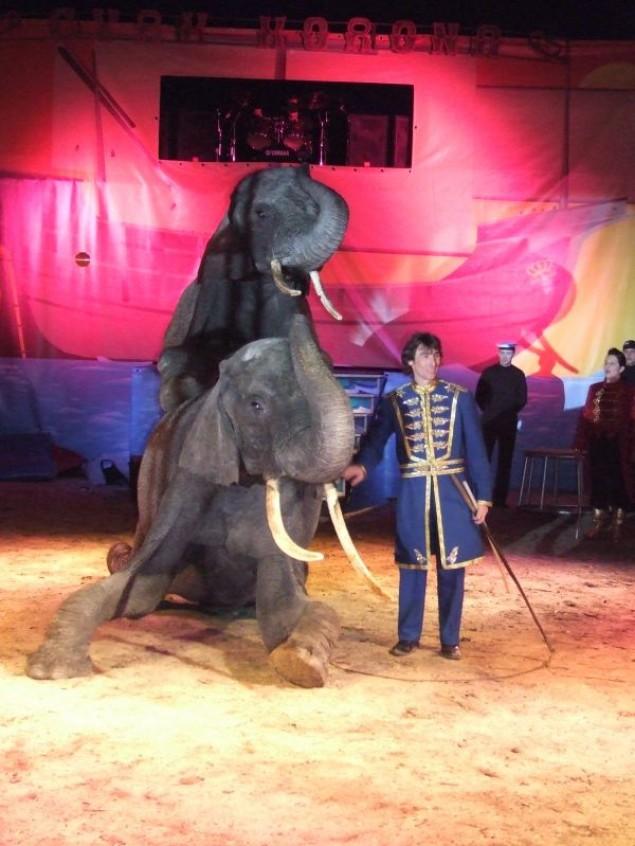 Do Czechowic przyjeżdża cyrk