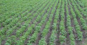 Działki rolne do wydzierżawienia