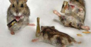 Na pomoc myszce