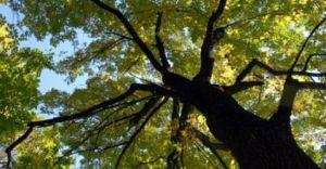 Prace leśne w Lesie Górnym w Czechowicach-Dziedzicach
