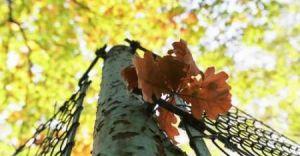 Foto-dnia: Jesień