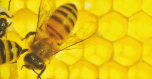 Ukazała się kronika organizacji pszczelarskich z lat 1931-2019