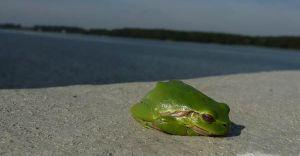 Foto-dnia: żabie leniuchowanie