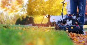 Jak się przygotować do jesieni w ogrodzie?