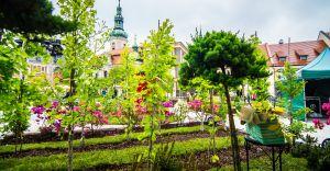 Daisy Days w Pszczynie - ogrody, koncerty, mapping, gra miejska