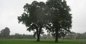 Będą nowe drzewa. UM ogłosił przetarg na nasadę kompensacyjną