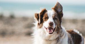 Jak wybrać dobrą karmę dla psa?