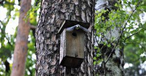 Nowe budki lęgowe dla ptaków zawisną w Parku Miejskim