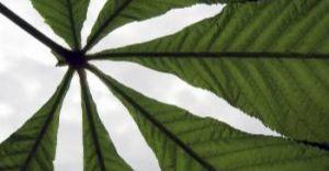 Uczniowie sięgają po marihuanę