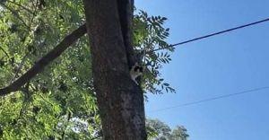 Strażacy zadysponowani do kota, który nie potrafił zejść z drzewa