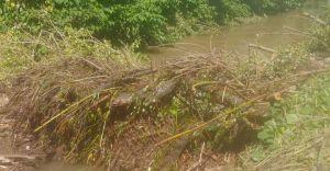Powalone drzewo w korycie Iłownicy. Interweniowali strażacy