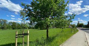 Przez 16 lat na gminnych terenach zielonych wycięto 4278 drzew