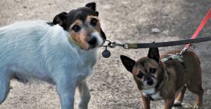 Gmina zapłaci właścicielom psów i kotów za kastrację ich zwierząt