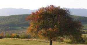 Radni zapłacą za prywatne drzewa