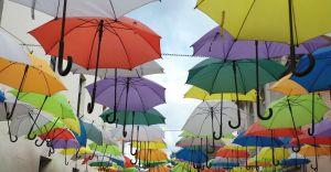"""[WIDEO] """"Skandal"""" pod parasolką. O Pszczynie mówi cała Polska!"""