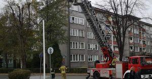 [FOTO] Kot utknął na drzewie. Z pomocą ruszyli strażacy z JRG-2