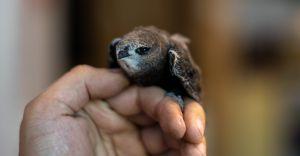 Jerzyk uratowany! Czechowiccy hobbyści udzielili pomocy ptakowi
