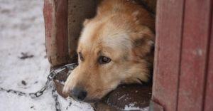 Dbajmy o zwierzęta! Apel Wydziału Ochrony Środowiska i Rolnictwa