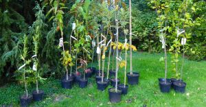 W Czechowicach powstanie bank drzew dla mieszkańców
