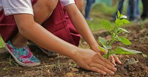 Mieszkańcy wymienili surowce wtórne na 200 sadzonek drzew!