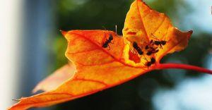 Foto-dnia: pierwsze oznaki jesieni w Czechowicach-Dziedzicach
