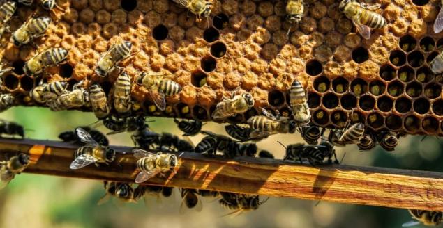 Pszczelarstwo