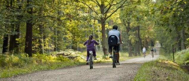 rower, ścieżka rowerowa, las, kolarze