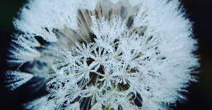 Foto-dnia: poranne przymrozki przypominają o zimie