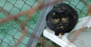 Fundacja planuje zorganizowanie przytuliska dla bezdomnych kotów