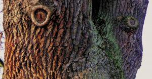 """Książka """"Drzewa mówią"""" - niezwykła podróż po historii Ligoty"""