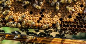 Erwin Woźniak o pszczelarstwie, pszczołach i pszczelarzach w MDK